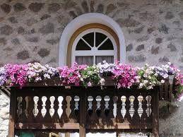 Resultado de imagen de plantas colgantes para balcones #Plantascolgantes #balconplantas