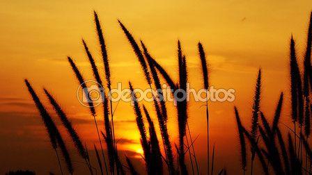 Nature elements — Stock Photo © photostocknatonny #76943581