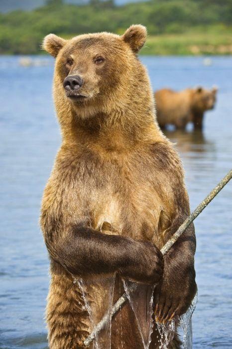 "Brown Bear Fisherman  ""This Rods a Bit Stiff"""