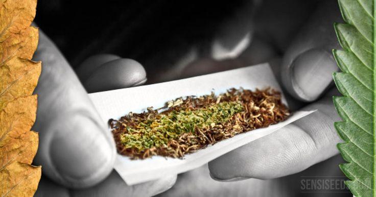 Los complejos efectos de la nicotina cuando se mezcla con el cannabis