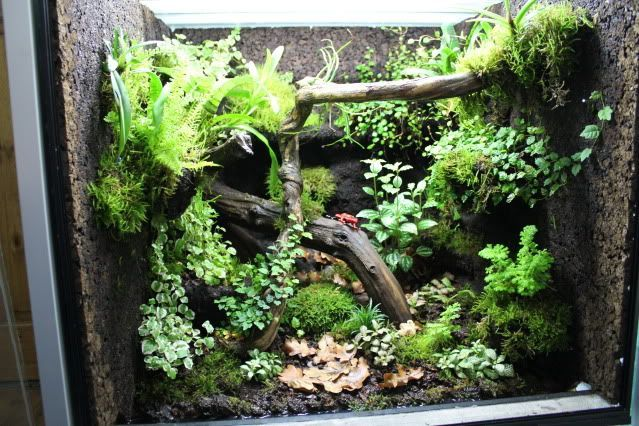 The 39 how to build a dart frog viv thread page 2 for Forum habitat plus