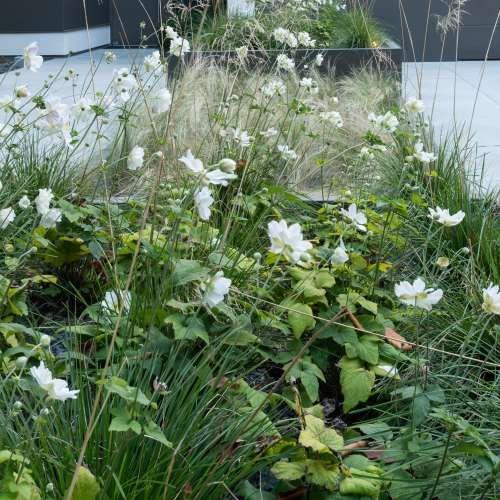 557 best Garten images on Pinterest Modern contemporary homes - moderner vorgarten mit kies