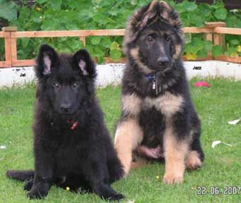 German Shepherds are THE cutest puppies.