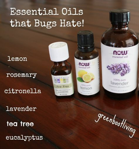 Looking for a Homemade Insect Repellent? This homemade insect repellent is a great option. The insects are intense in Florida during the summer . I feel much better aboutputting these non-toxic ingredients on my kiddos. I love DIY formulas that are quick, easy and actually work. Fill a spray bottle with: 3ounces water 1 ounce witch hazel or aloe vera juice 10 drops tea tree […]