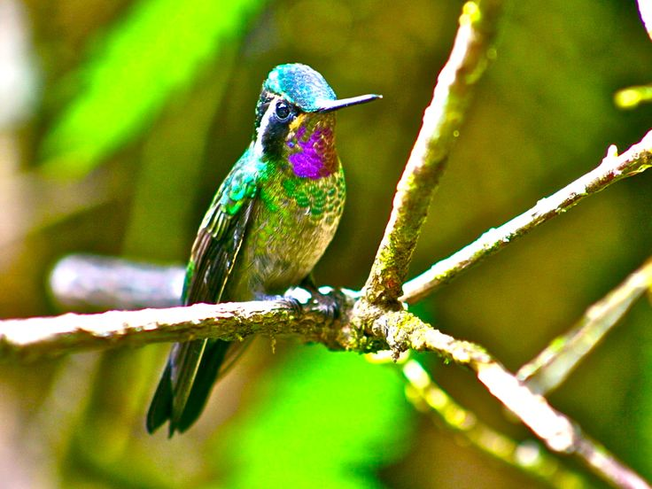 Costa Rica : les 8 incontournables !