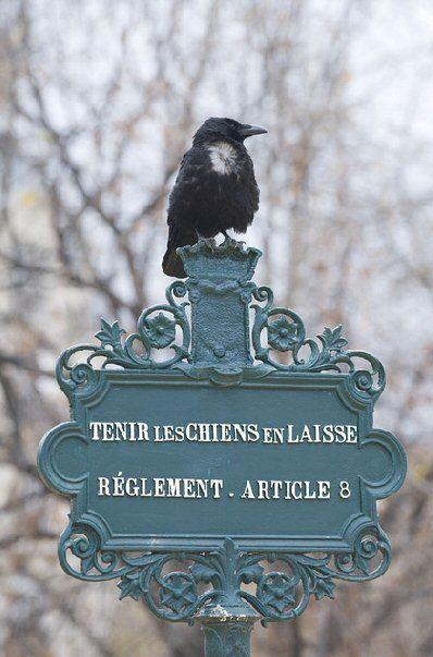 Pancarte, dans un square de Paris, les oiseaux s'en fichent ! (all dogs must be kept on lead, but birds don't care a dam!)