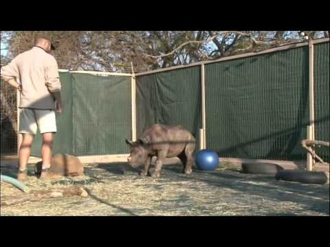 The world's first dedicated rhino orphanage opened in South Africa   http://umhambi.blogspot.de/2012/08/the-worlds-first-rhino-orphanage-opened.html