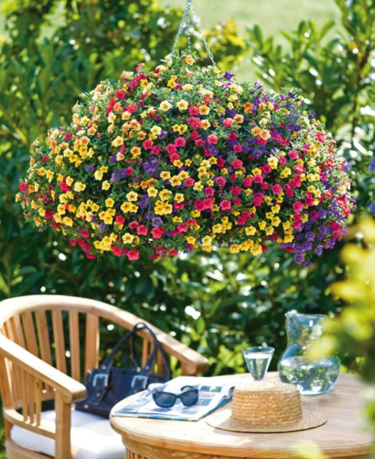 TOP 10 Plants for Stunning Hanging Baskets - Top Inspired Calibrachoa, also known as Million Bells