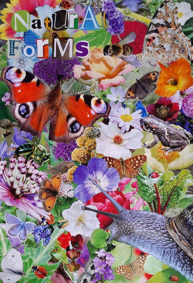 GCSE Art First Homework Project: Natural Forms Montage