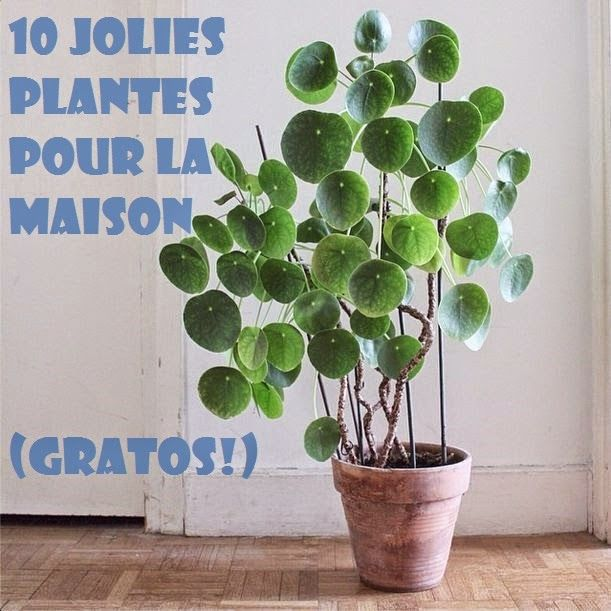 Funky Sunday: DIY: A green home [for free] 10 jolies plantes d'intérieur à faire soi-même...