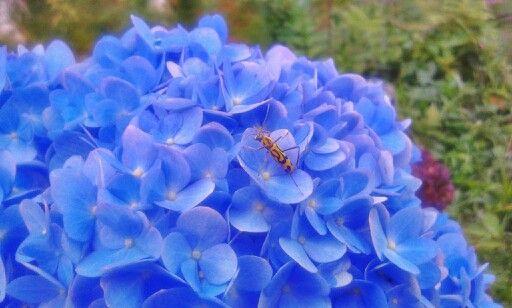 beetles and flowers