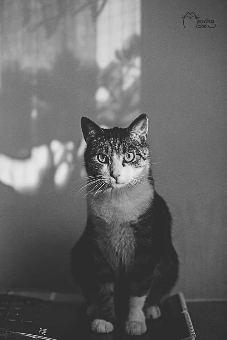 Monika Małek - Cats