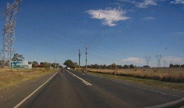 Kangaroos Crossing The Road Caught on Dashcam in Australia