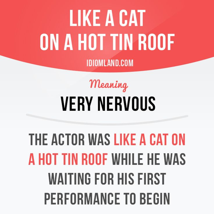 """""""Like a cat on a hot tin roof"""" means """"very nervous"""". Example: The actor was like…"""