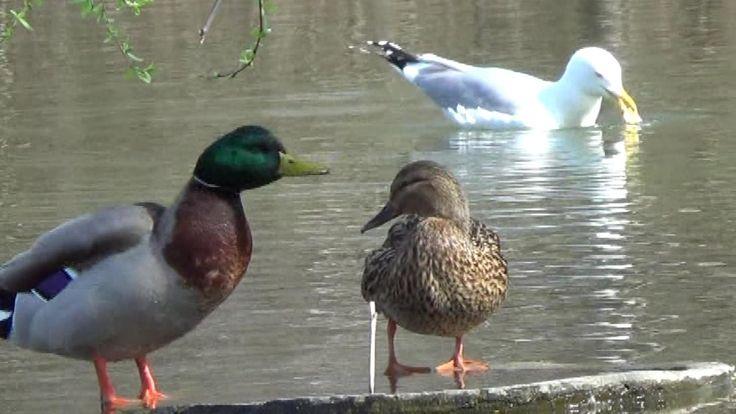 Viața păsărilor de aproape - început de martie în Grădina Botanică
