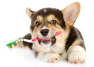 Dentistry | Advanced Veterinary Medical Center