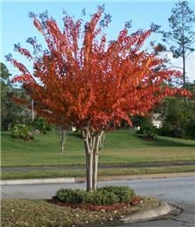 What Brand Of Plant Food Is Best For Crape Myrtles