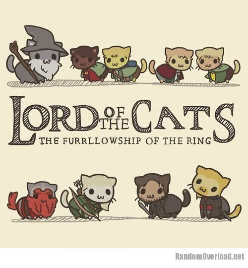 Funny Pictures From Lord of the Rings | 3511funny-Lord-Of-The-Rings-Cats-wizard.jpg