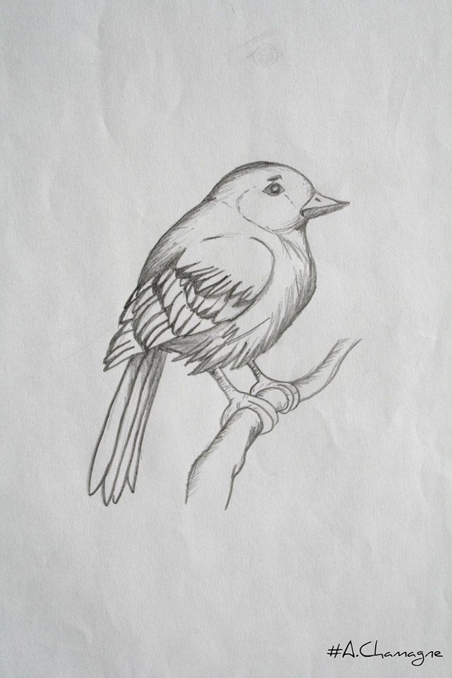 Passion of Drawing  dessin d'oiseau