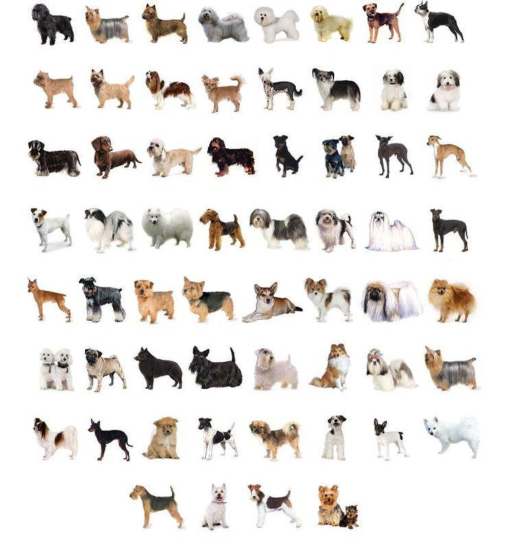 En la siguiente tabla encontrarás un listado de las diferentes razas de perros. Clica sobre la letra por la cual empiece la raza de la que desees tener información, y obtendrás un pequeño resumen d...