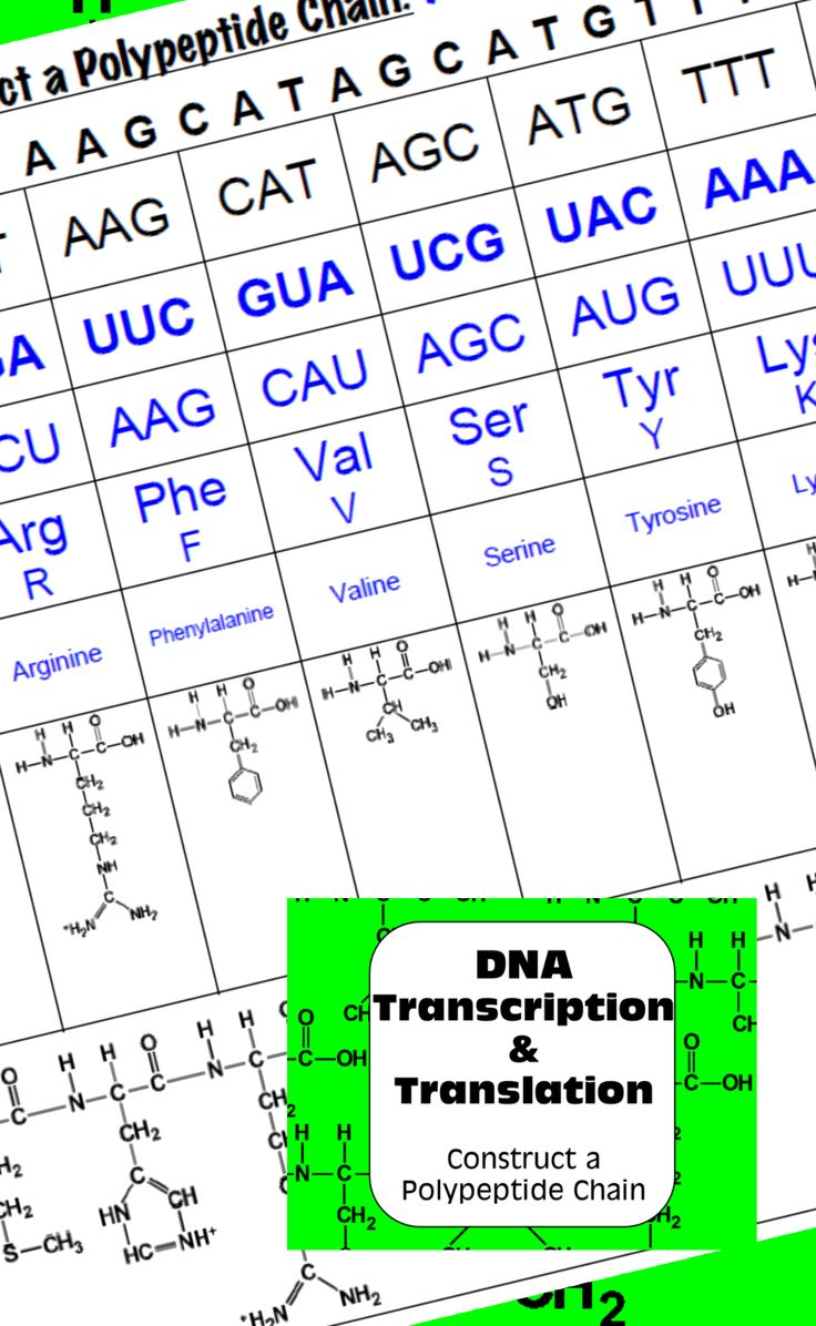 DNA Transcription & Translation: Construct a Polypeptide Chain - V1&2 Bundle                                                                                                                                                                                 More