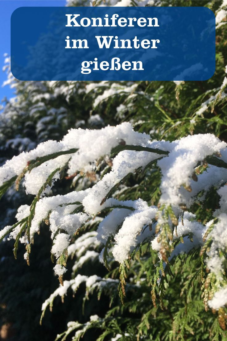 Der Garten Halt Keinen Winterschlaf Gartenbob De Der Garten Ratgeber Winter Koniferen Garten
