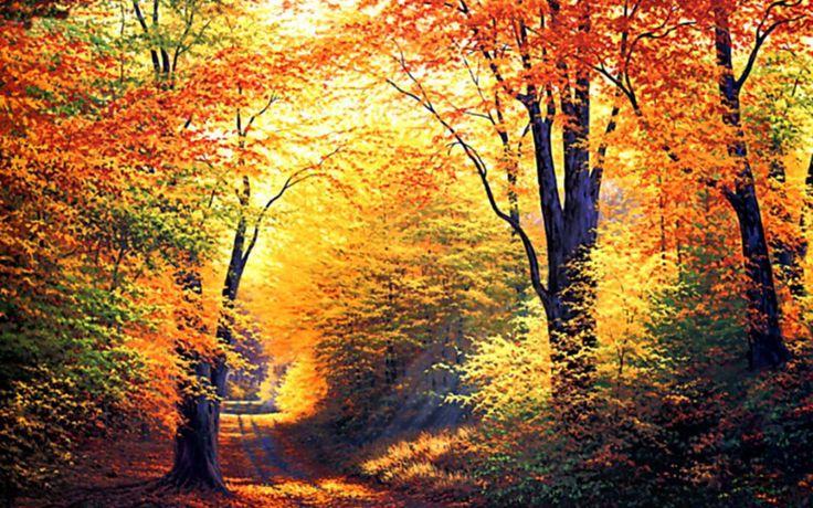 zlota-polska-jesien.jpg (1920×1200)