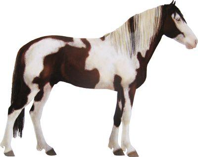 Le Barbe Espagnol un poney originaire des États Unis