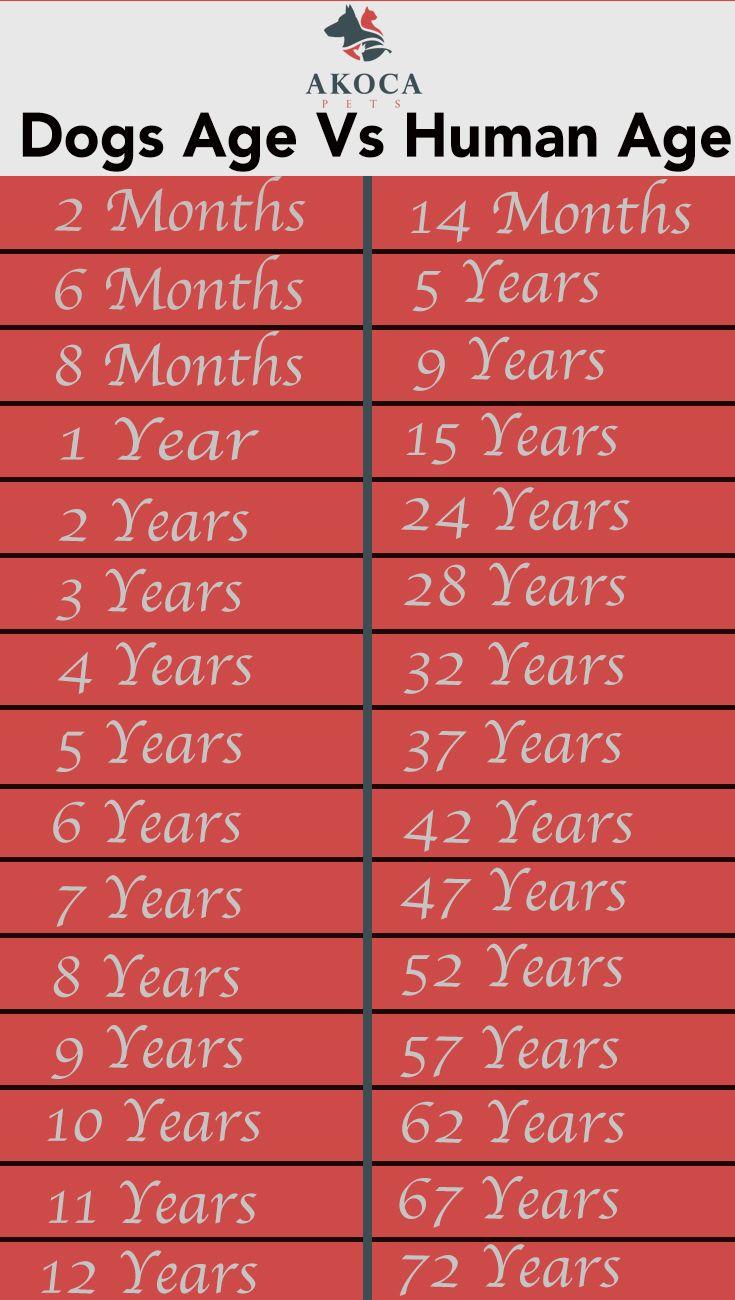Dog years Vs Human Years - Akoca Pets