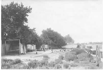 MP 5195. Poultry farm in Glen Iris between railway station and creek - summer; c.1910.