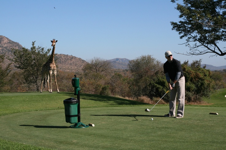 Golf Safari with a difference.