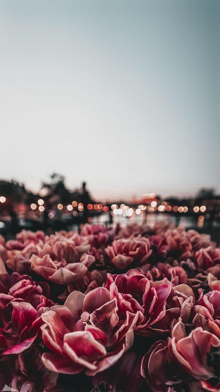 Flower wallpaper for phone
