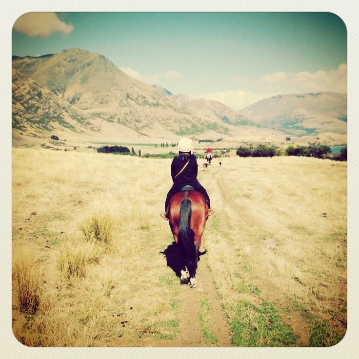 New Zealand horseback riding
