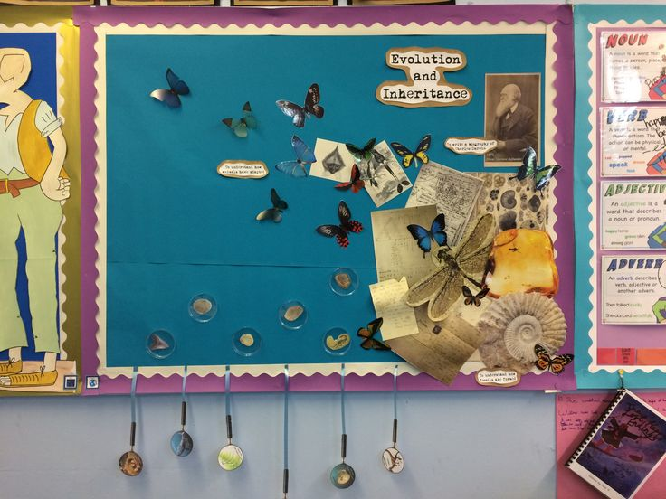 Year 6 Evolution and Inheritance display with Charles Darwin. Children match magnifying glasses with prehistoric animals and plants to the 'fossils' in the petri dishes