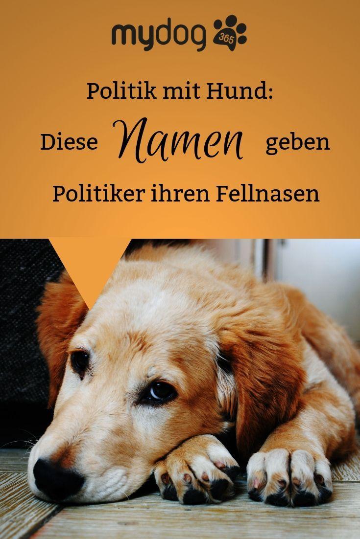 Inspiration Fur Hundenamen Gefallig Wir Haben Uns Gefragt Wie Eigentlich Politiker Ihre Liebsten Fellnasen Genannt Haben Hundenamen Hunde Hunde Ernahrung
