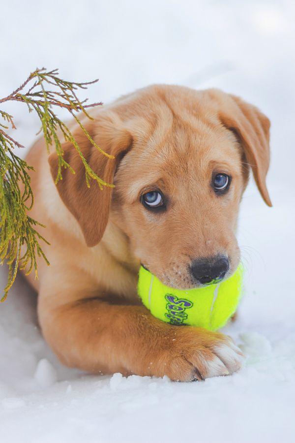 [Image: 3b15a28309e819271d7b829e65698b49--puppy-...uppies.jpg]