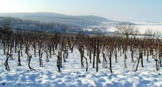 Piccolo Mondo : Il vino venuto dal freddo e dal ghiaccio - Eiswein...