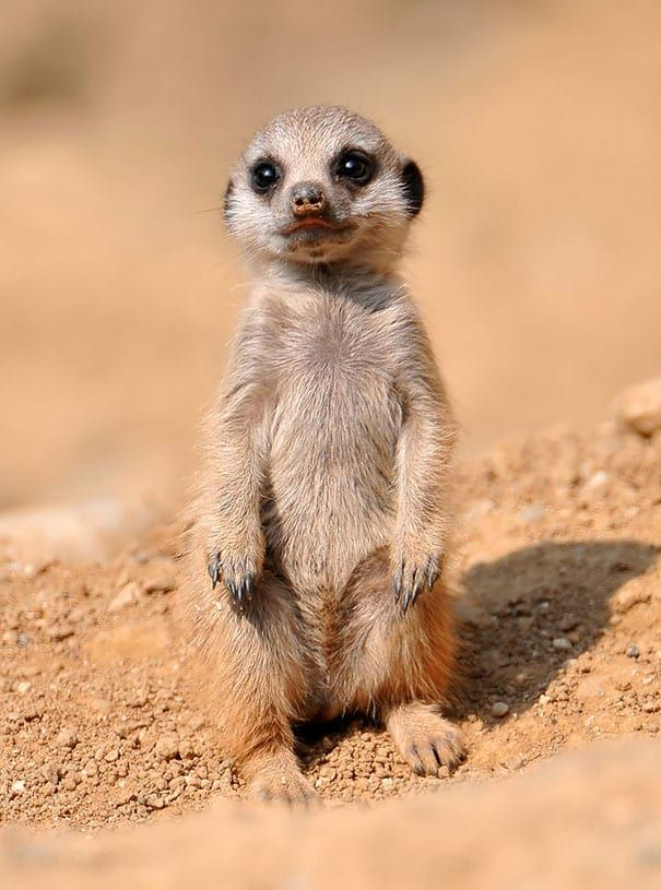55 Baby Animals That Shouldn't Be Allowed To Be This Cute