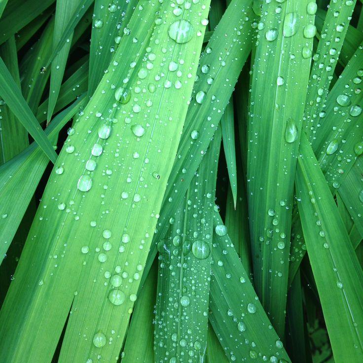 Morning raindrops