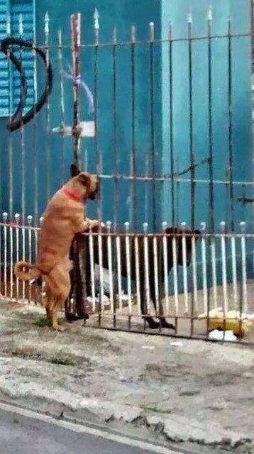 El amor no tiene barreras.