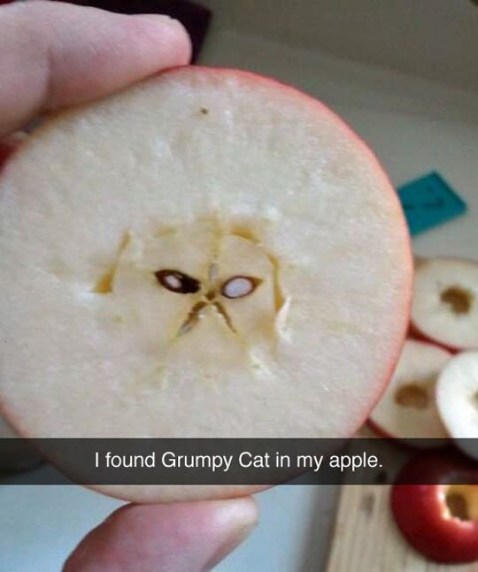 Grumpy Apple // funny pictures - funny photos - funny images - funny pics - funny quotes - #lol #humor #funnypictures