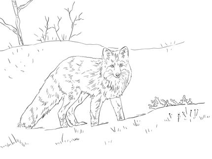 Click To See Printable Version Of Red Fox In Snow Coloring Page