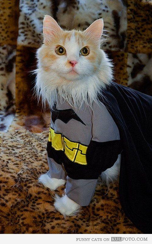 3b17309c6f339838da7cef5a443dee32--batman-costumes-cats-in-costumes.jpg