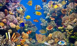 5 Aquarium Cleaning Tips http://home.howstuffworks.com/home-improvement/household-hints-tips/cleaning-organizing/aquarium-cleaning-tips.htm #Aquarium #CleaningTips