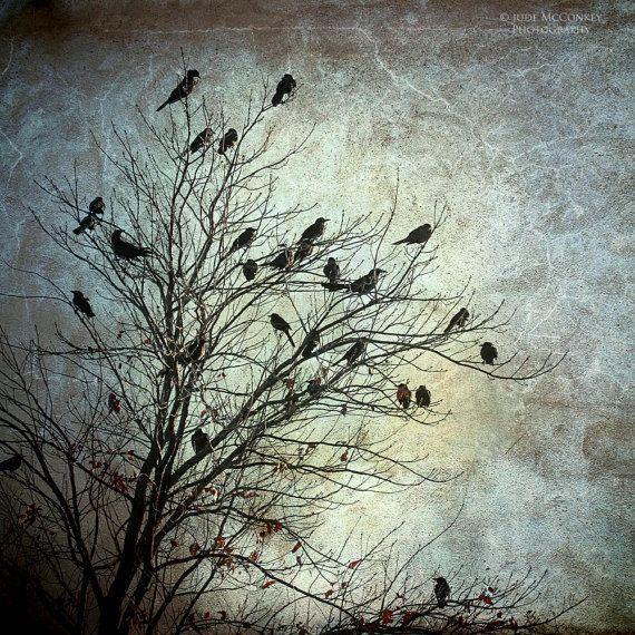 Baum Fotografie Landschaft Fotografie Vögel Krähen Raben dunkle Kunst Wohnkultur  #dunkle #fotografie #krahen #landschaft #raben #vogel