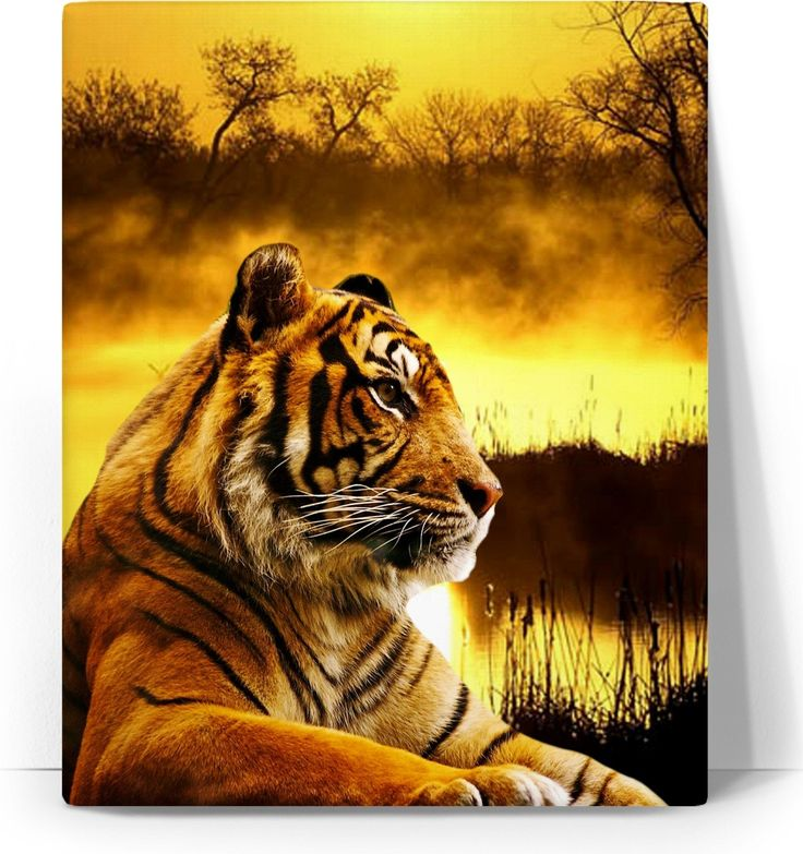 Check out my new product https://www.rageon.com/products/tiger-and-sunset-art-canvas-print?aff=BWeX on RageOn!