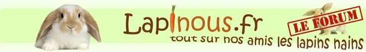 Forum Lapinous.fr, tout sur nos amis les lapins nains !