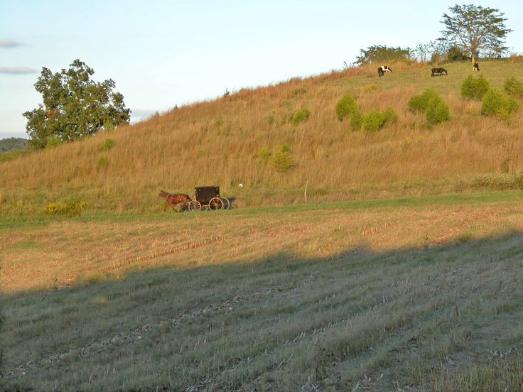 Crab Orchard Amish hurrying home before sundown~ Sarah's Country Kitchen ~