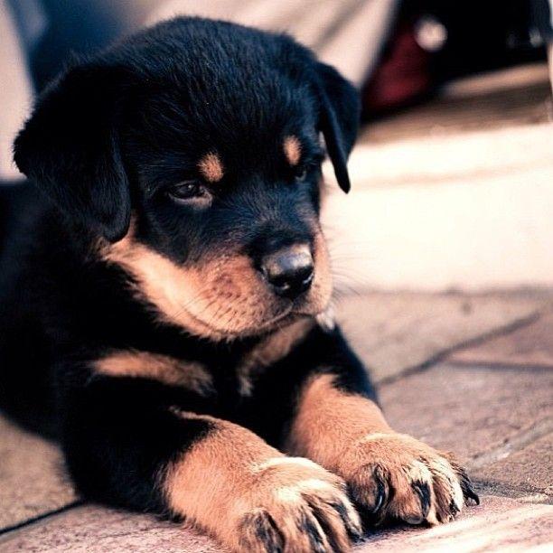 #cachorros #perros #puppy Animal Party 2014 7 y 8 de Junio - Hipódromo Son Pardo (Palma de Mallorca) www.animalpartymallorca.com Facebook goo.gl/qQh18b Twitter goo.gl/TKzBgD