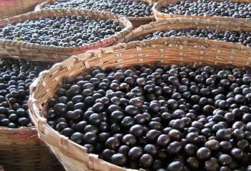 Insider Acai Benefits That You Should Know